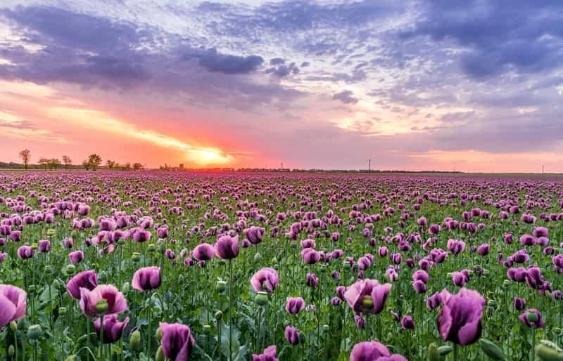 Top 10 Herbs with Purple Flowers